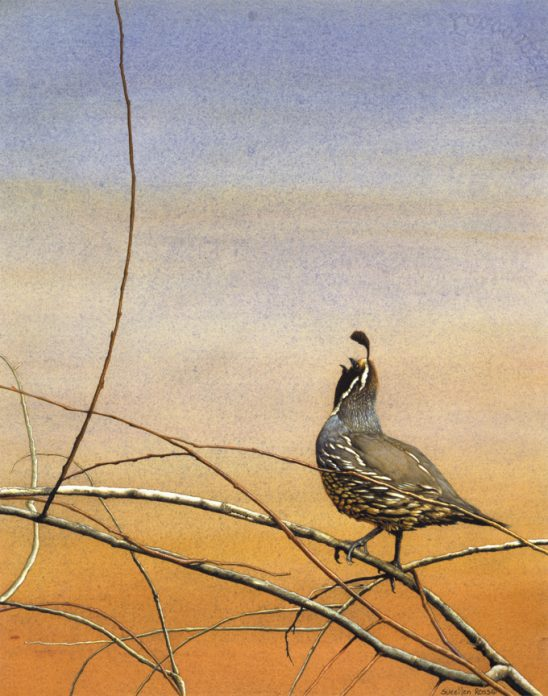 Sunrise Serenade – Quail by Sueellen Ross
