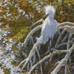 Egret in Fall by Laura Mark-Finberg