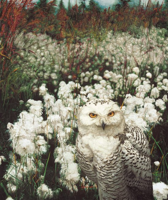 Alaskan Cotton – Snowy Owl by Sueellen Ross