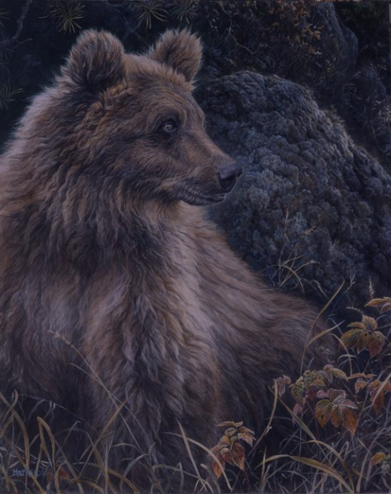 Montana Grizzly by Laura Mark Finberg
