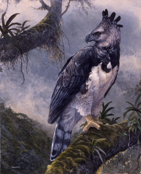 Myth of the Mayan – Harpy Eagle by Laura Mark-Finberg