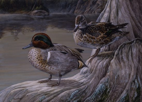 Otter Creek Teal by Laura Mark-Finberg