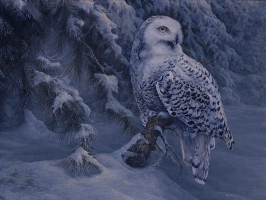 Snowy Owl 2 by Laura Mark-Finberg