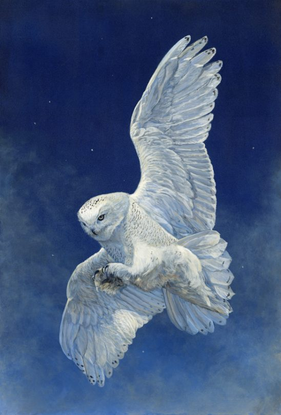 Starry Night – Snowy Owl by Laura Mark-Finberg