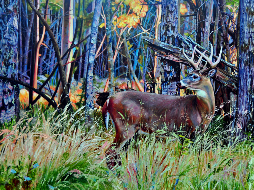 Camouflage – White Tail Deer by Kelly McNeil