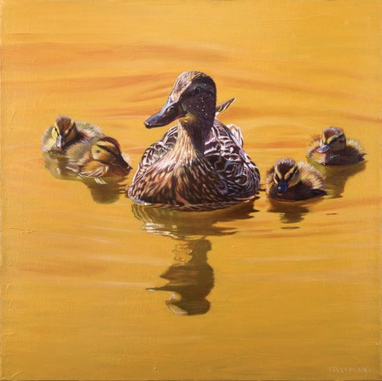 On Golden Pond – Mallards by Kelly McNeil