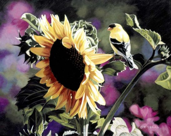Goldfinch and Sunflower by Terry Isaac