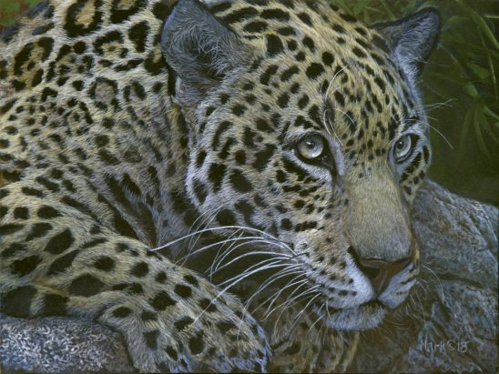 Jaguar by Laura Mark-Finberg