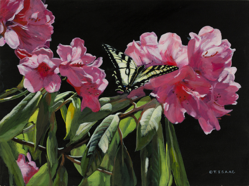 Pretty in Pink by Terry Isaac