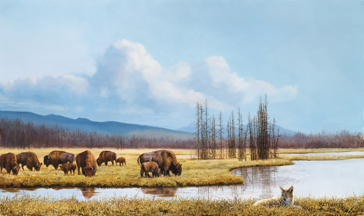 Bison and Coyote by Bonnie Marris