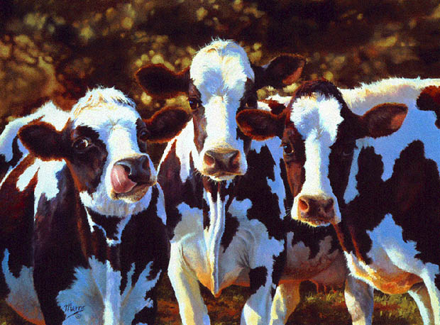 Dairy Queens by Bonnie Marris