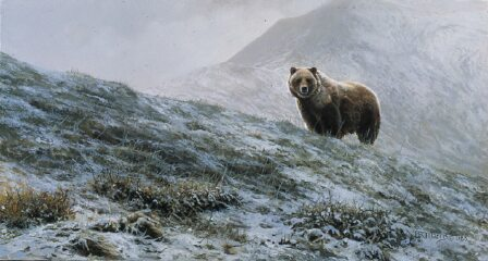 Sable Pass Grizzly by Bonnie Marris