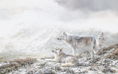Three Wolves by Bonnie Marris