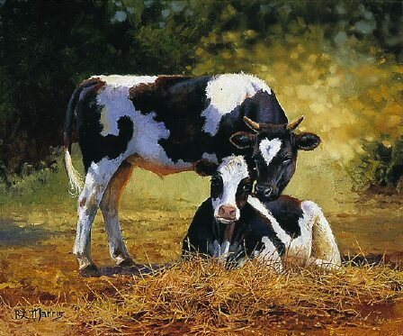Two Cows (Untitled 34) by Bonnie Marris