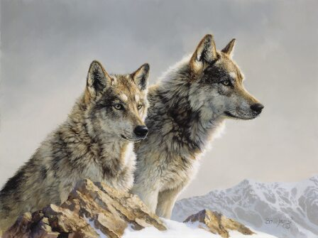 Two Wolves by Bonnie Marris