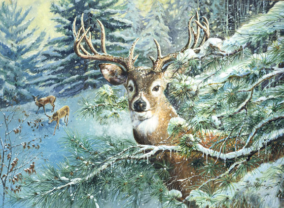 Close up Deer by Jess Hager