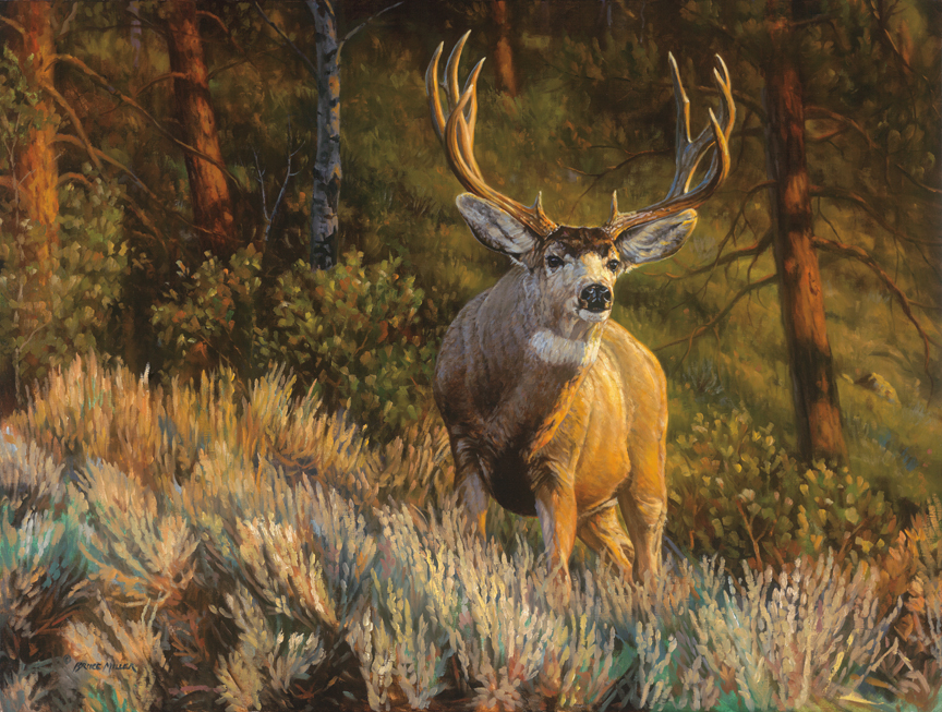 Edge of the Forest Mule deer by Bruce Miller