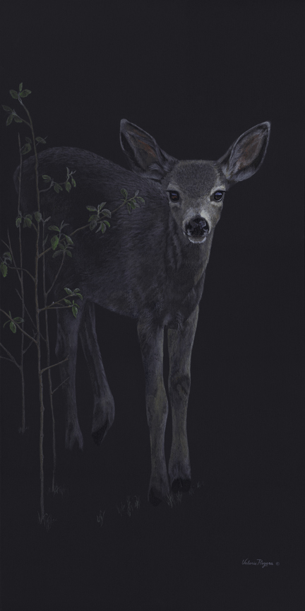 Out of the Dark – Fawn by Valerie Rogers
