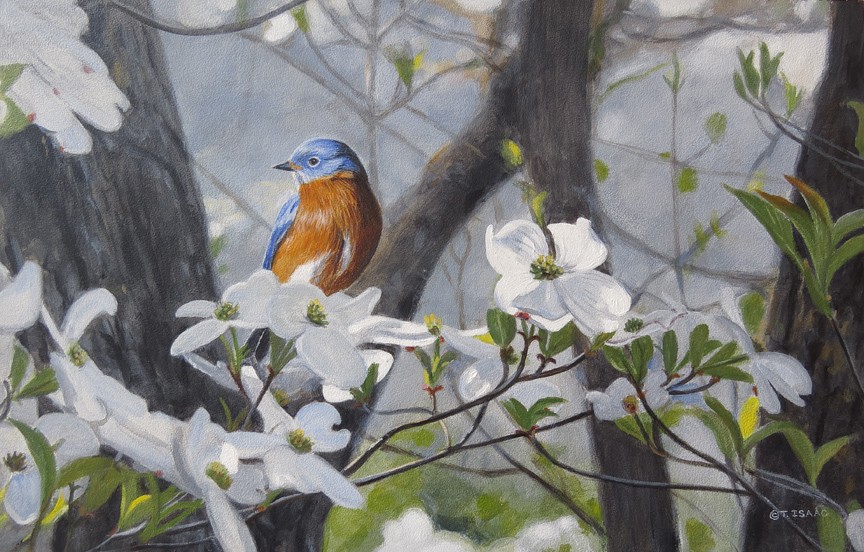 Bluebird and Dogwood by Terry Isaac