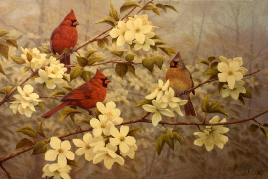 Cardinals in Apple Blossoms by Greg Alexander
