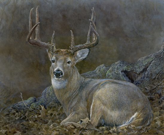Deer Bedded Down by Laura Mark-Finberg