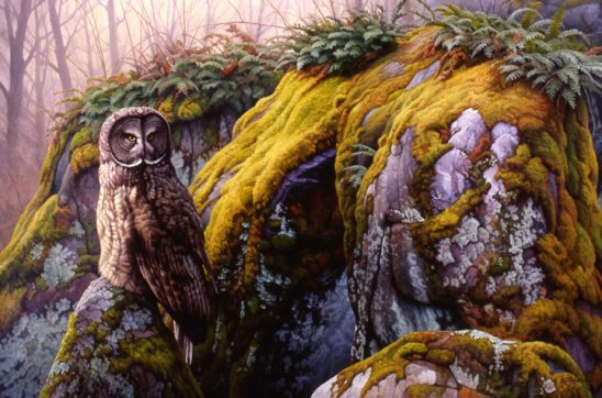 Great Gray Owl by Greg Alexander
