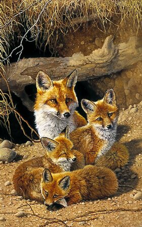 The Fox Family by Bonnie Marris