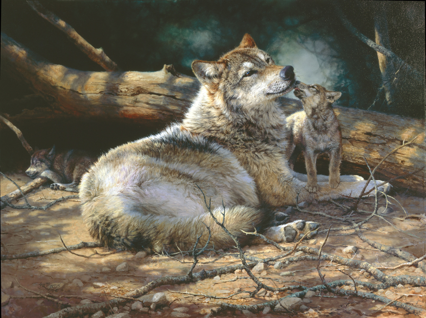Wolf and Kit by Bonnie Marris