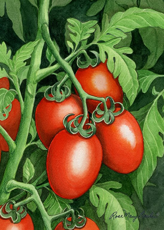 Garden – Roma Tomatoes by Rose MarBerlin