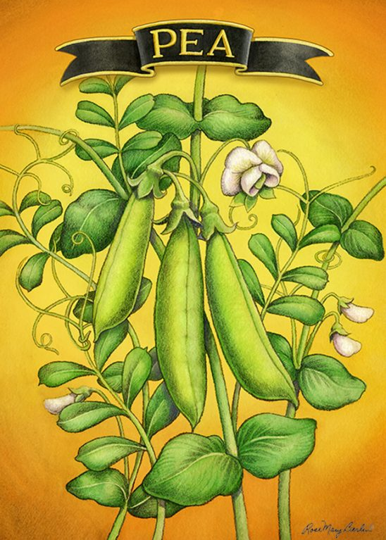Garden – Snap Pea 2 by Rose Mary Berlin