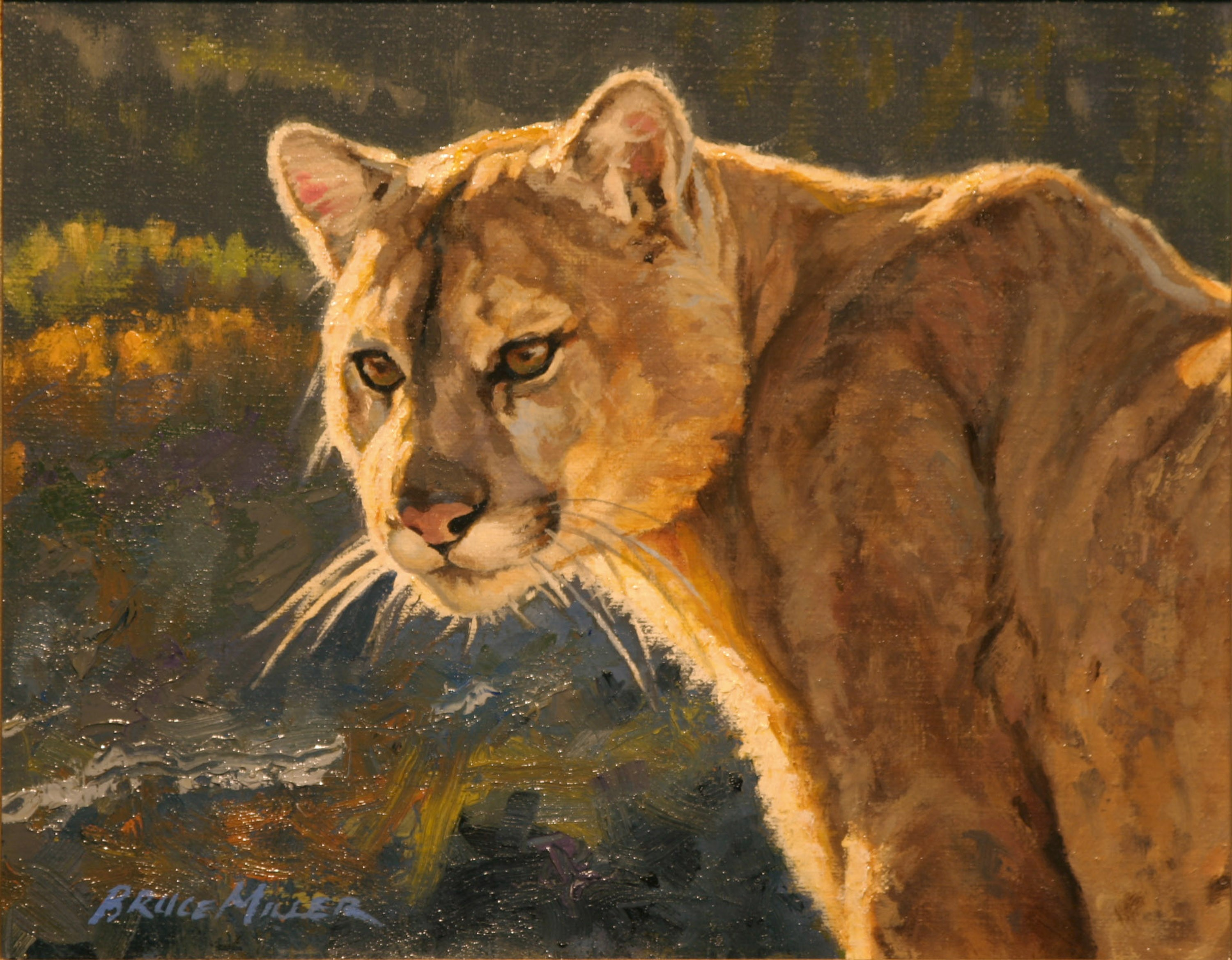 Cougar Lookout by Bruce Miller
