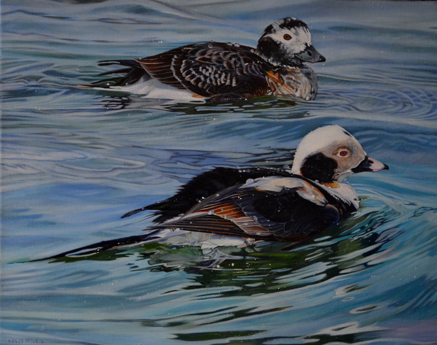 Long Tailed Ducks by Kelly McNeil