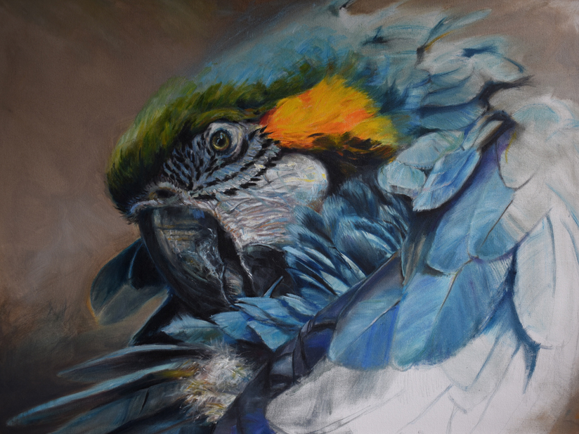 Blue Macaw by Amy Brackenbury