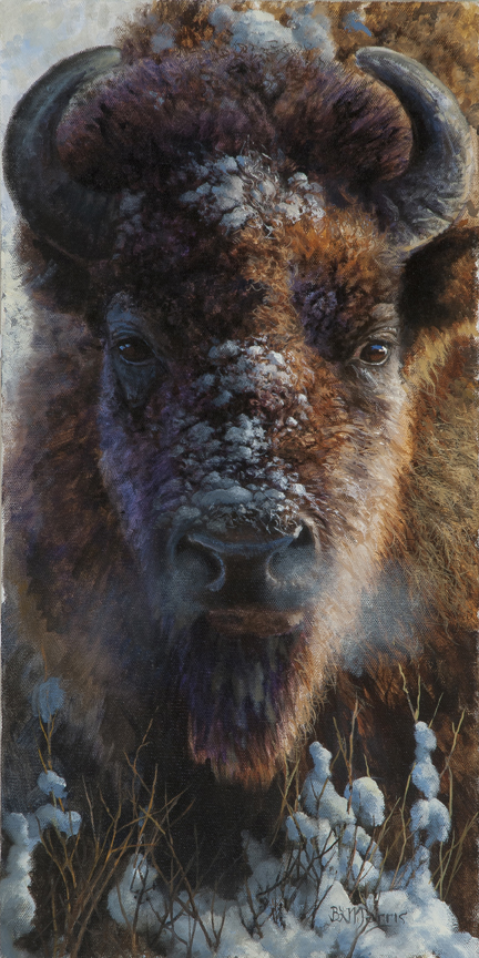 Winter Buffalo by Bonnie Marris