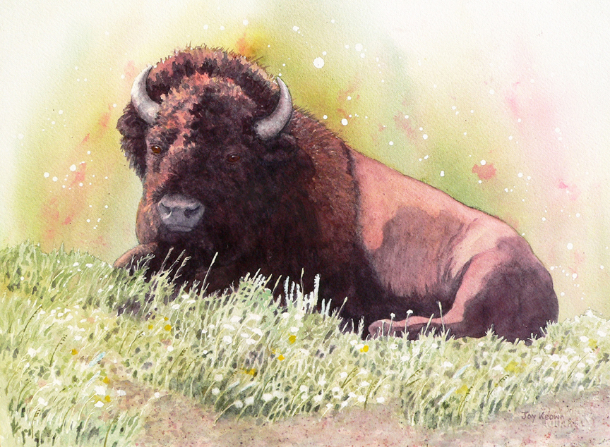 Bison Bull and Wildflowers by Joy Keown