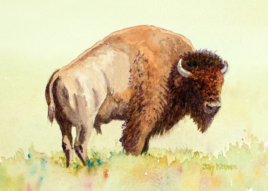 Bison by Joy Keown