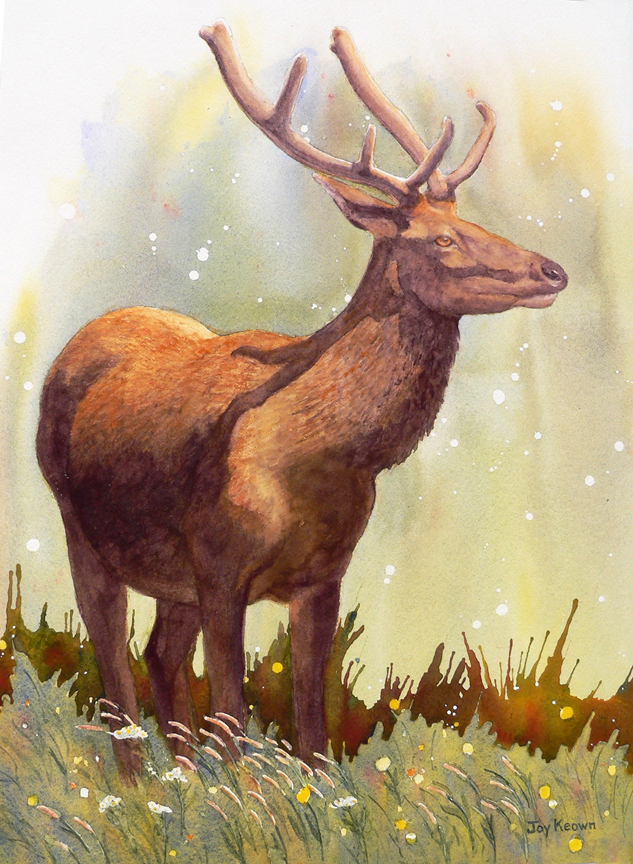 Bull Elk and Yarrow by Joy Keown