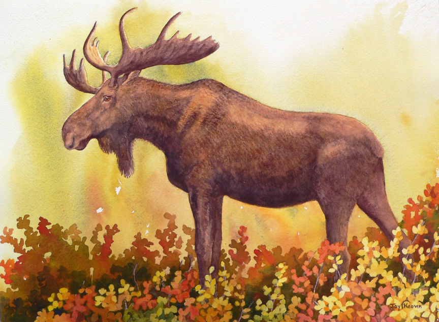 Bull Moose and Willows by Joy Keown