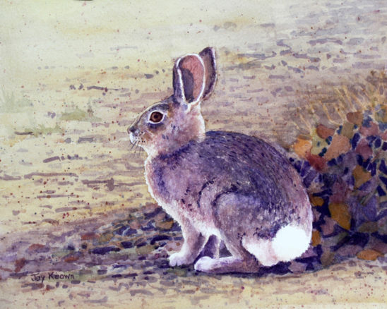 Cottontail Rabbit by Joy Keown