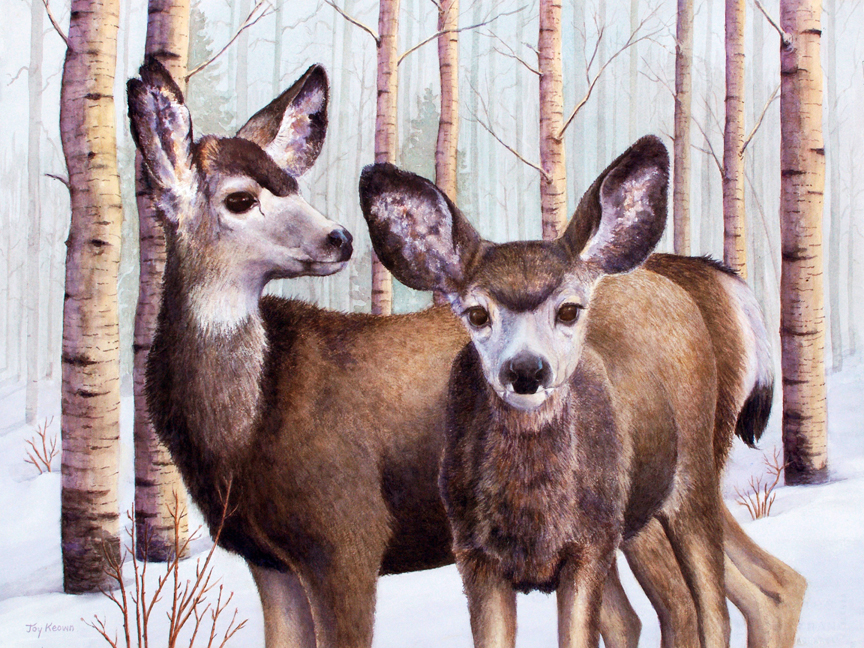 Mule Deer by Joy Keown