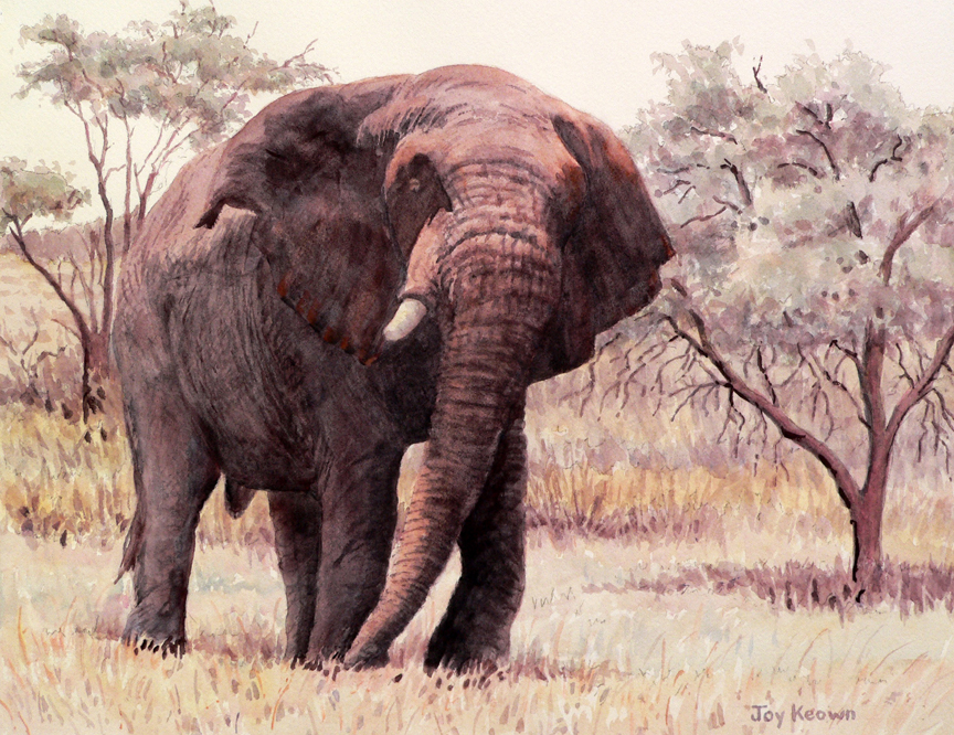 Old One Tusk (study) by Joy Keown