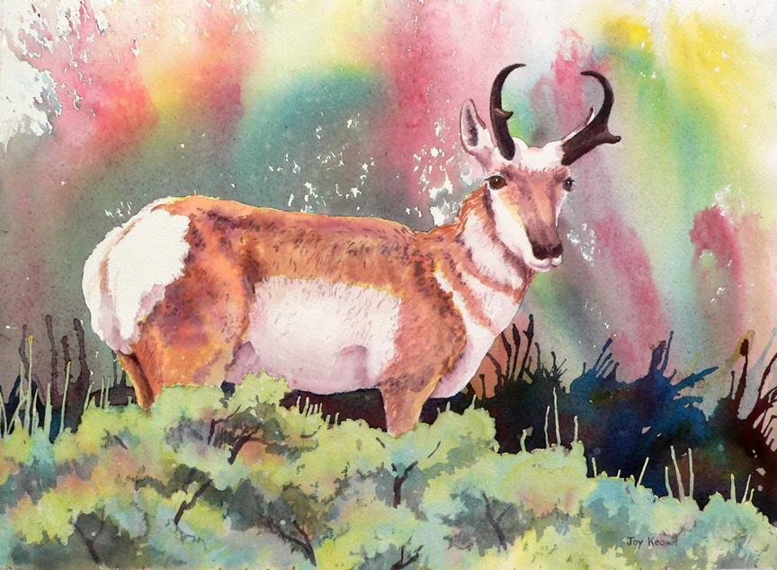 Pronghorn Buck and Sagebrush by Joy Keown