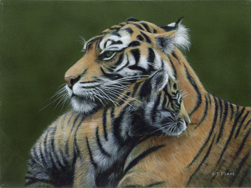 Tiger Love by Terry Isaac