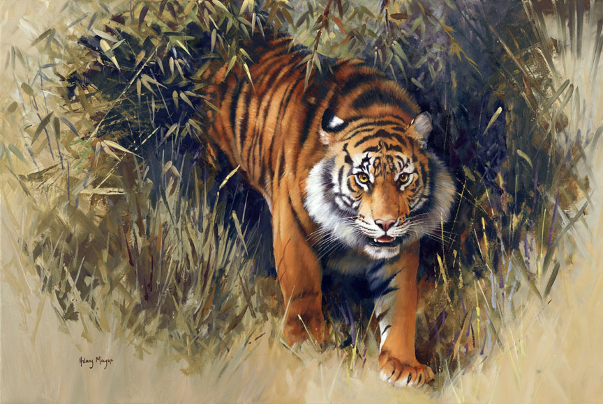 Wildlife – Jungle Tiger by Hilary Mayes
