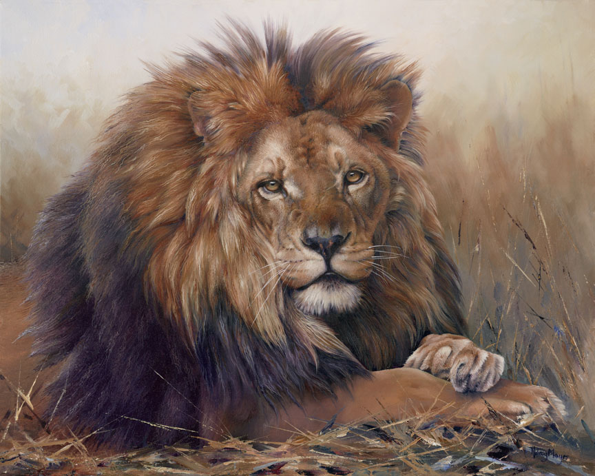 Wildlife – Lion by Hilary Mayes