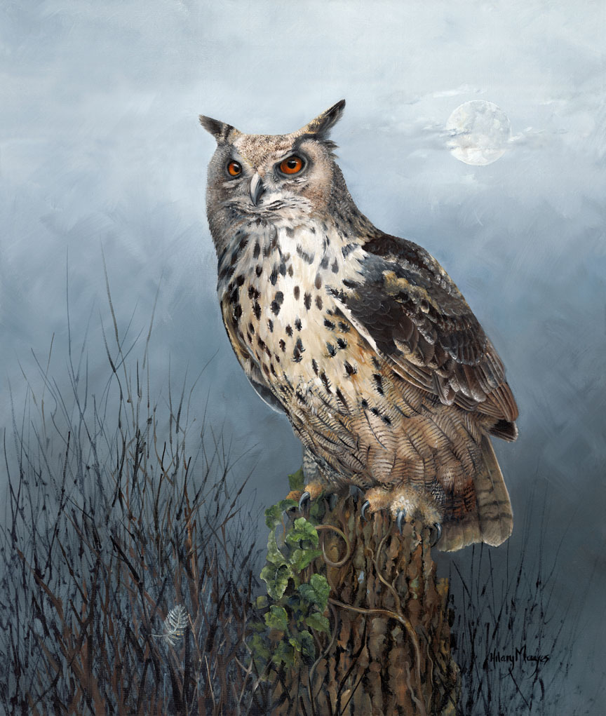 Wildlife – Owl by Hilary Mayes