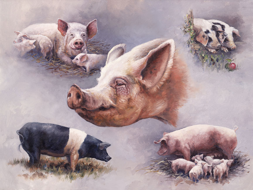 Wildlife – Pigs by Hilary Mayes