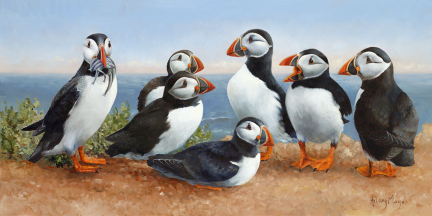 Wildlife – Puffins by Hilary Mayes