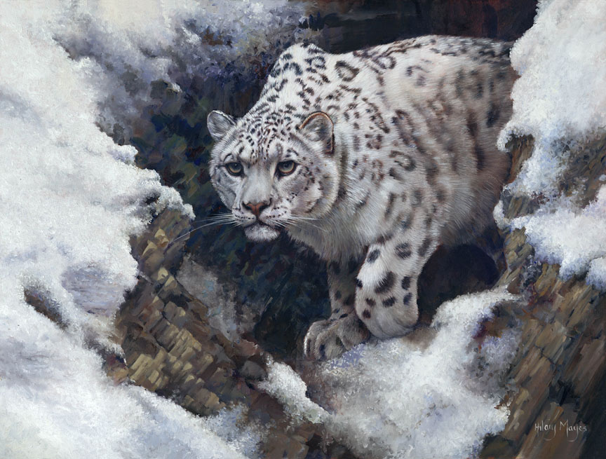 Wildlife – Snow Queen by Hilary Mayes