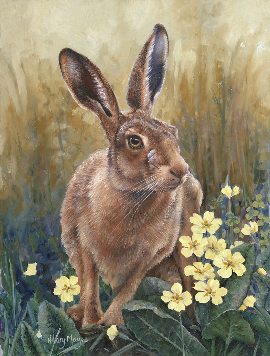 Wildlife – Spring Hare by Hilary Mayes